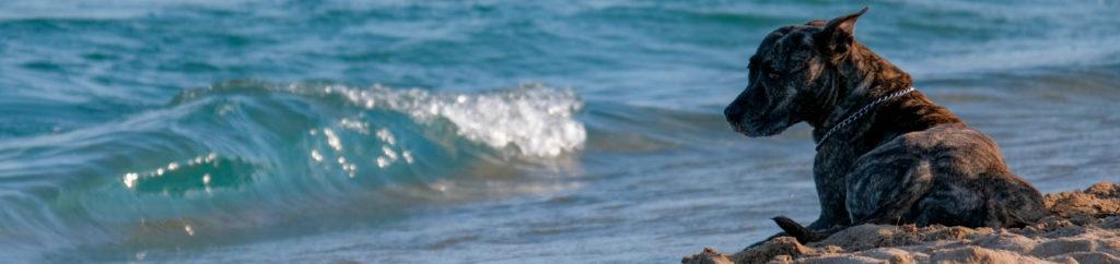 elige una playa para ir con tu mascota en alojamientos o muiño